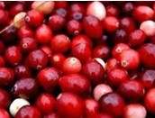 wholesale Cranberry Extract 25%