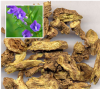 Skullcap Extract Powder 10:1 of picture