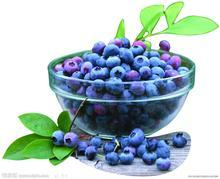 wholesale Bilberry Extract powder 10:1