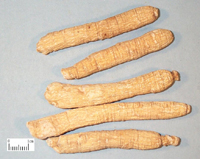 wholesale  American Ginseng Root Extract 10%UV