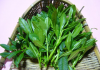 Panax Ginseng Leaves Extract 80%UV of picture