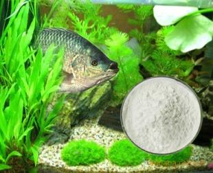 Wholesale fish collagen peptide powder 95 bulk price 67 for Fish collagen powder