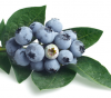 Blueberry Extract 25% of picture