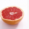 Grapefruit Seed Extract Powder 5:1 of picture